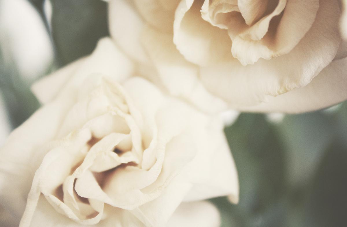 dead_flowers_025_copy.jpg