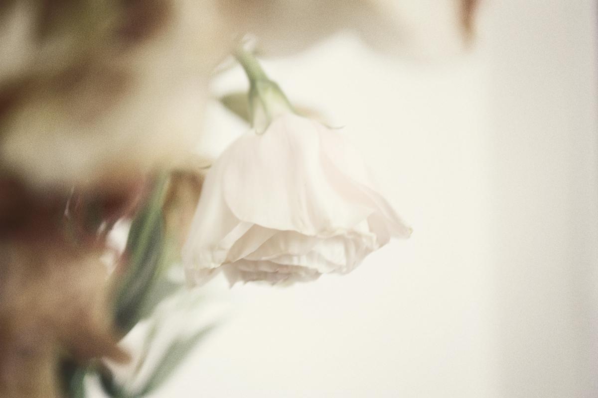 dead_flowers_066_copy.jpg